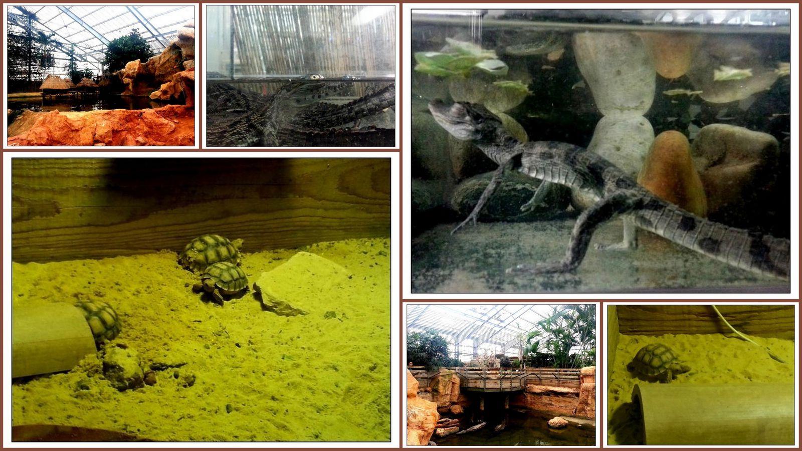 Ballade à la ferme aux crocodiles à Pierrelatte