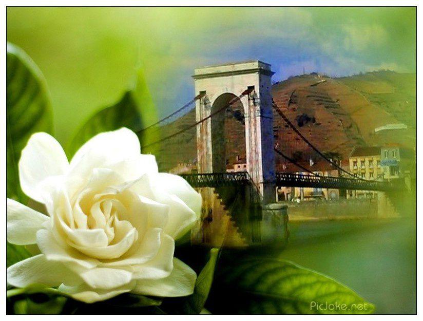 Les plus belles cartes postales...............