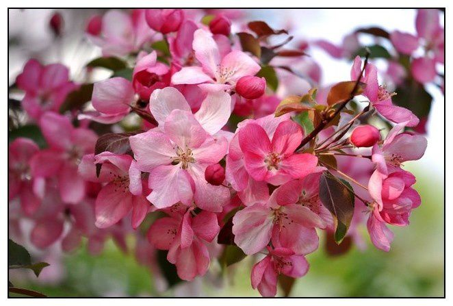 Un simple regard posé sur une fleur