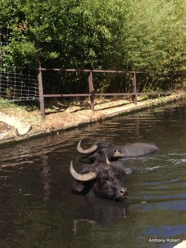 Petie balade au parc Safari de Peaugres (Ardèche)