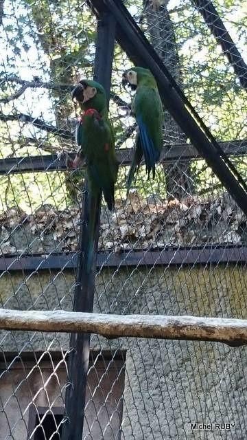 Le Jardin aux oiseaux, appelé aussi Zoo d'Upie 'Drôme'