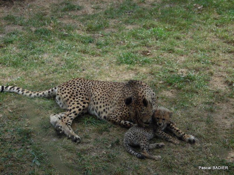 Safari de Peaugres, le plus grand parc animalier de Rhône-Alpes ...