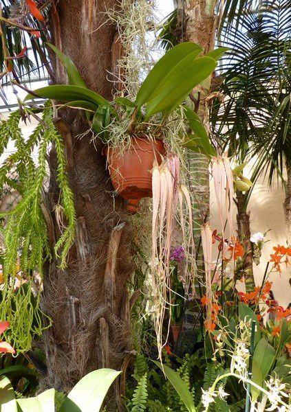 ...mais surtout une superbe exposition d'orchidées...