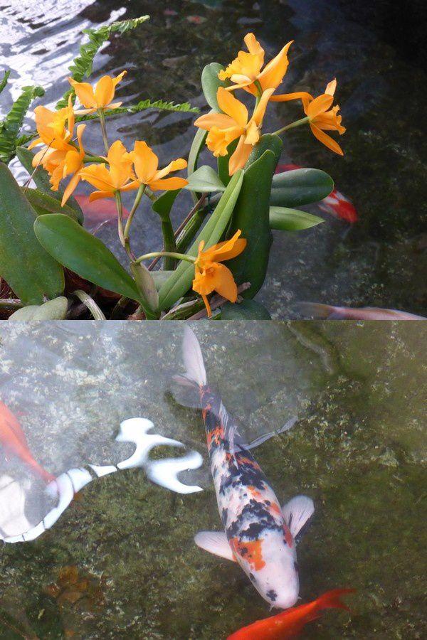 ..; des fleurs et des poissons...