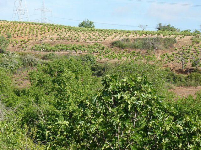 ..&#x3B;arrêt au petit village de Pieros...au milieu des vignes...