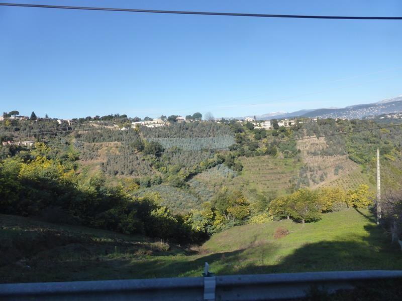 ...quelques plantations d'eucalyptus (pour les fleuristes)