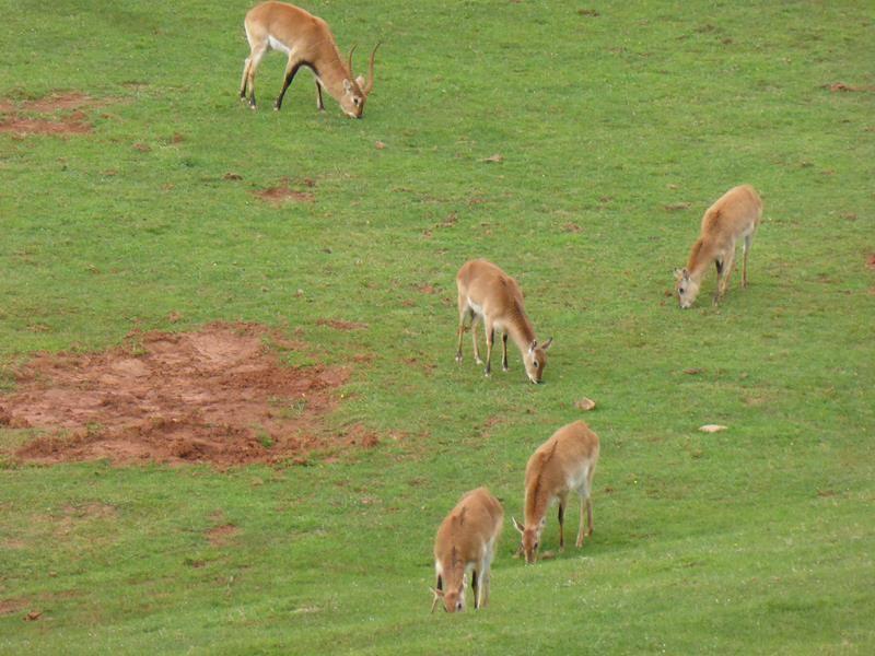 ..une aire située à Cabarceno près d'un grand parc animalier, apparemment très apprécié des espagnols...