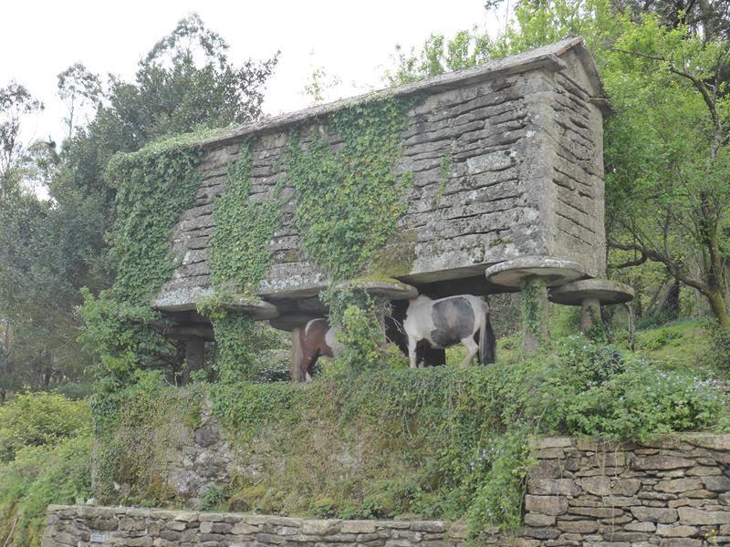 ...ou abri à poney ??? moins commun !!!