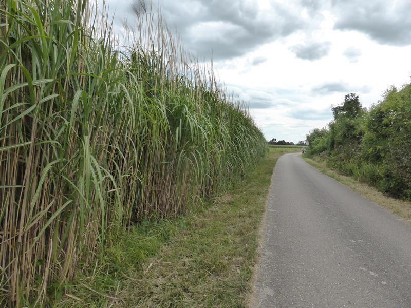 en Allemagne , une petite route très agréable qui serpente à travers champs....