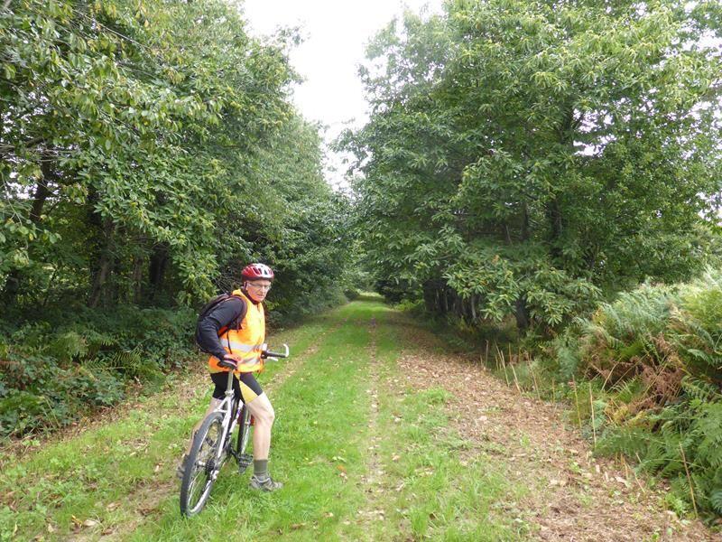 ..agréable sentier forestier dans la forêt de Villecartier...
