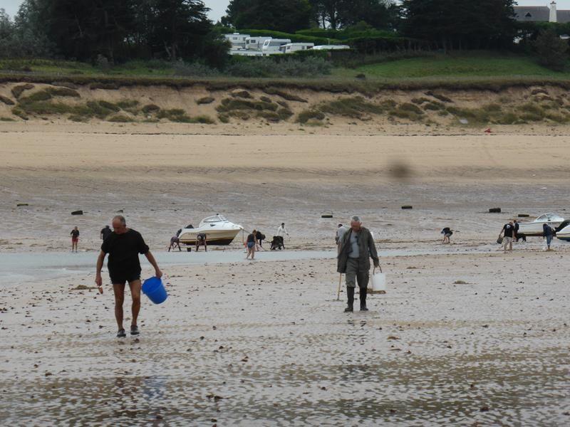 """...les pêcheurs à pied en profitent pour """"cueillir"""" quelques coquillages..."""