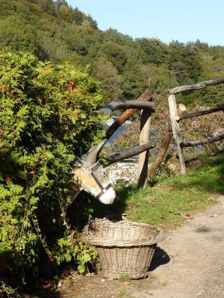 Escapade dans les Vosges méridionales...