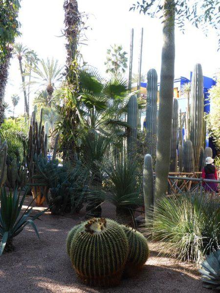 Marrakech...incontournable : le jardin Majorelle.