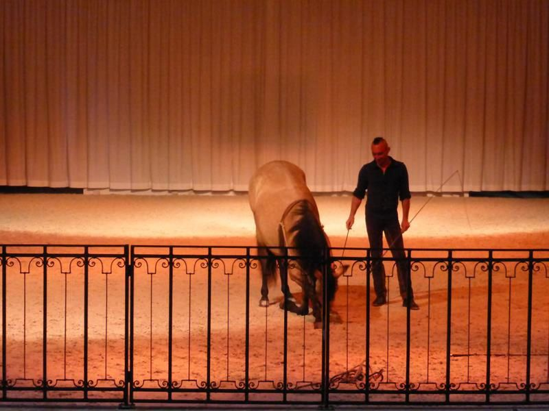 Le spectacle du Haras du Pin