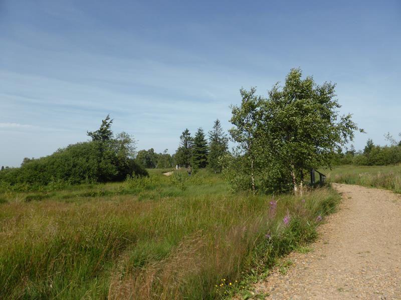 Balade en Hautes Fagnes (Belgique)