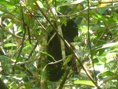 En exploration. ...dans le parc national  de Sikatuna