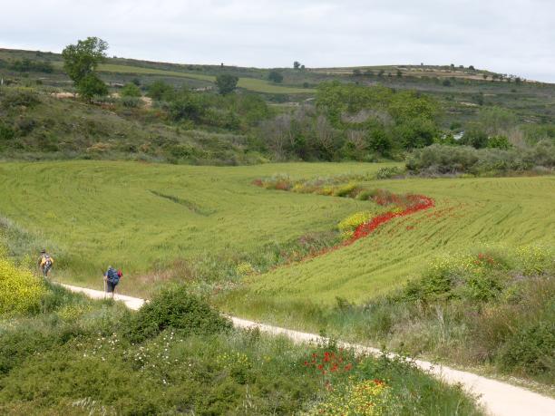 L'après-midi ne devait être que de la descente jusqu'à Viana... sans doute globalement !