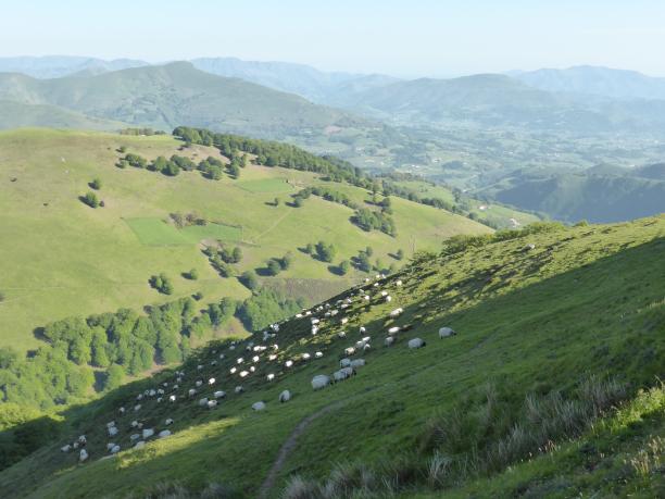 Soleil...ciel bleu.. les moutons sur les pentes...