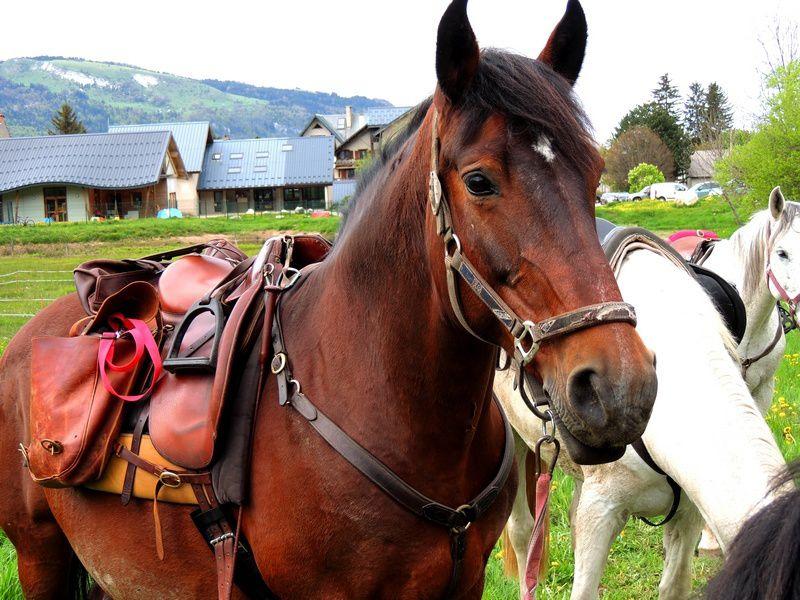 mini-rando à cheval