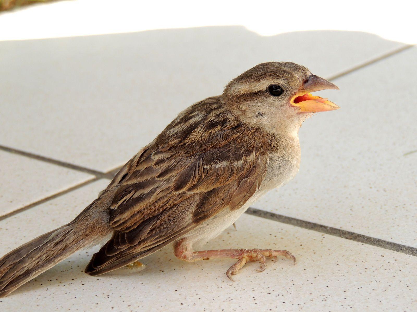 pauvre petit oiseau - poor little bird