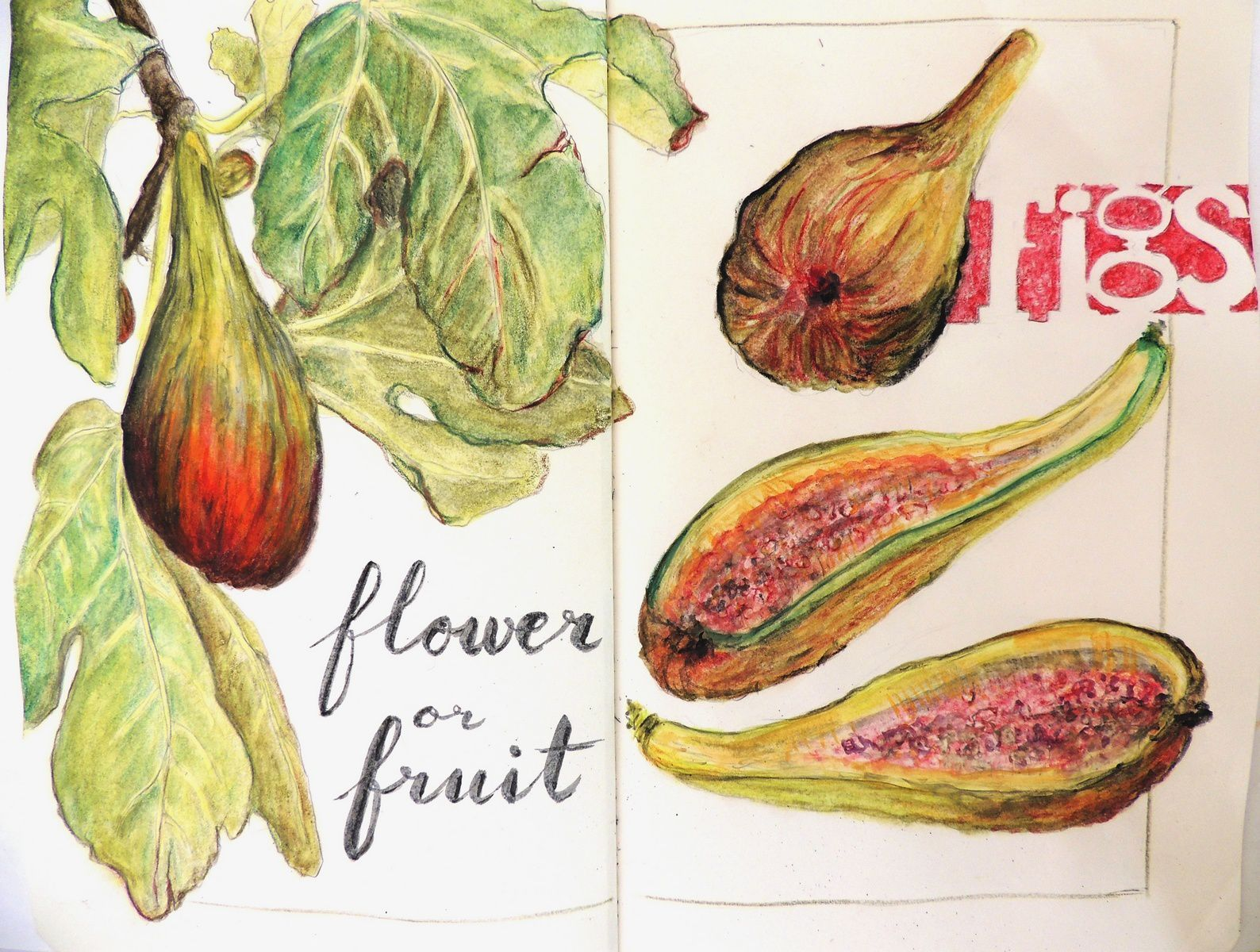 figues - figs