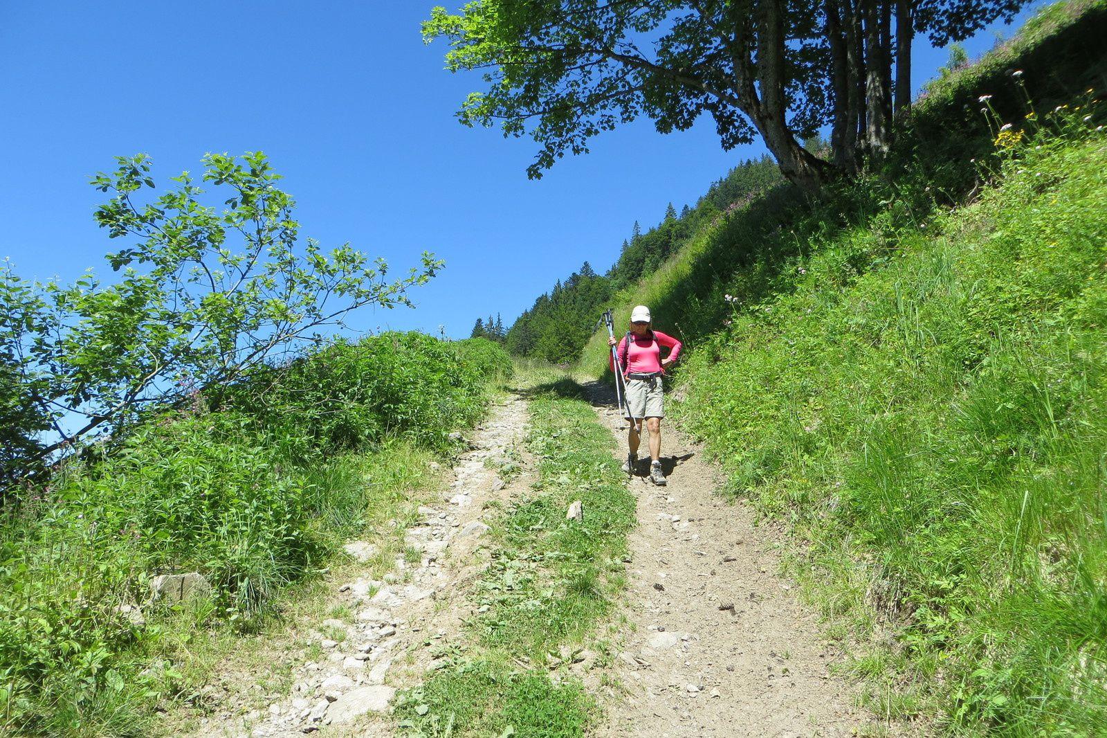 La piste pastorale sous le Chalet du Périllet
