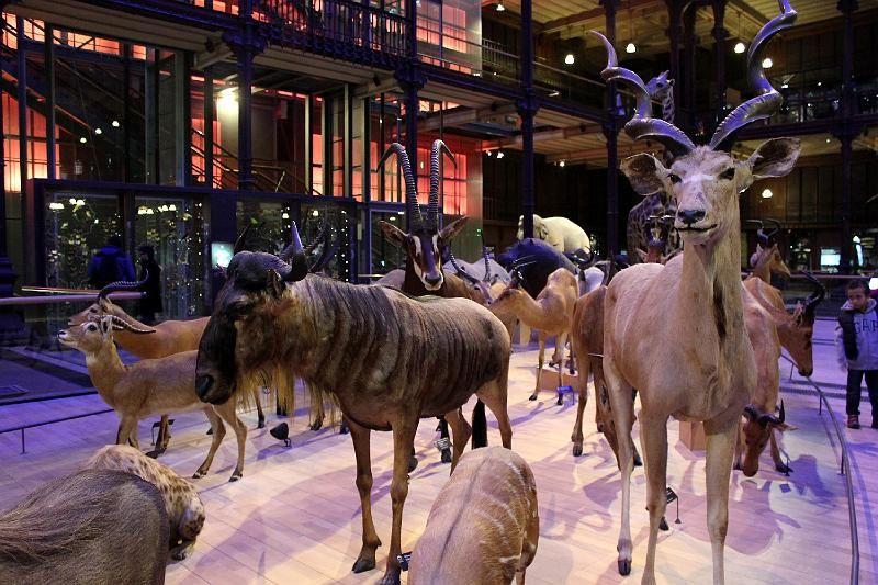 Musée des Arts Forains/Grande Galerie de l'Evolution