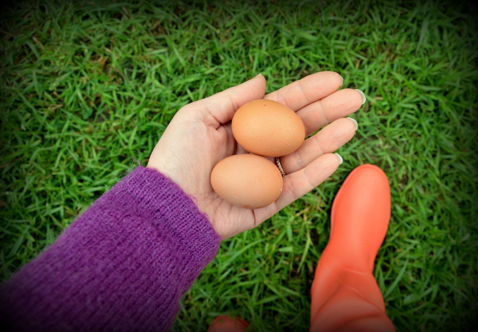 L'œuf ou la poule ?