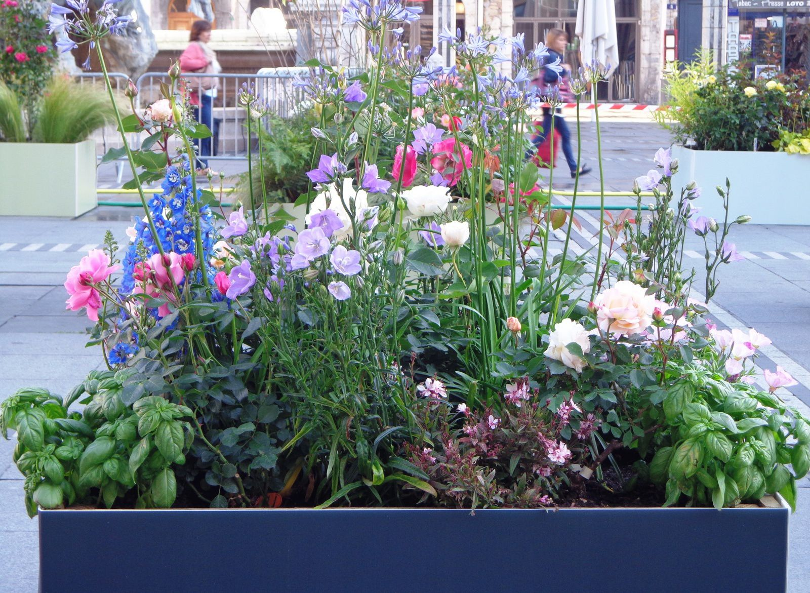 Lyon - Festival de roses !