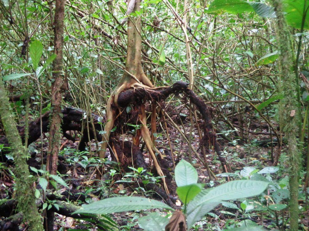 Costa Rica - Jour 3 : Monteverde - La forêt nuageuse