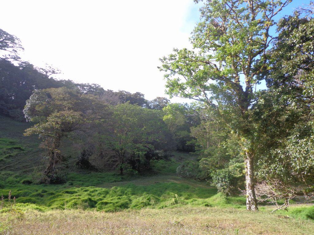 Costa Rica - Jour 4 : Monteverde - Curi Cancha
