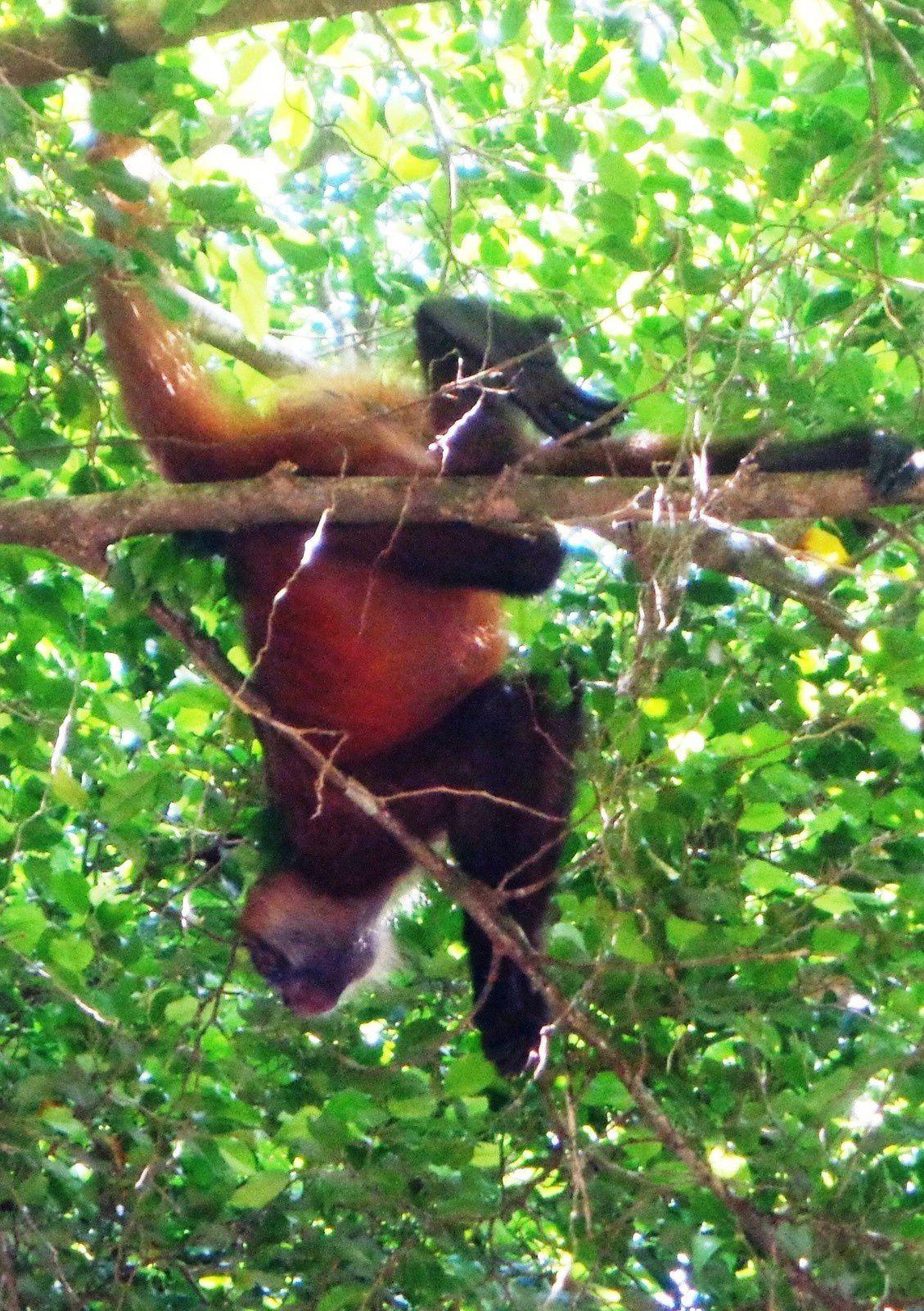 Costa Rica - Jour 9 : Tortuguero - Dans le parc naturel