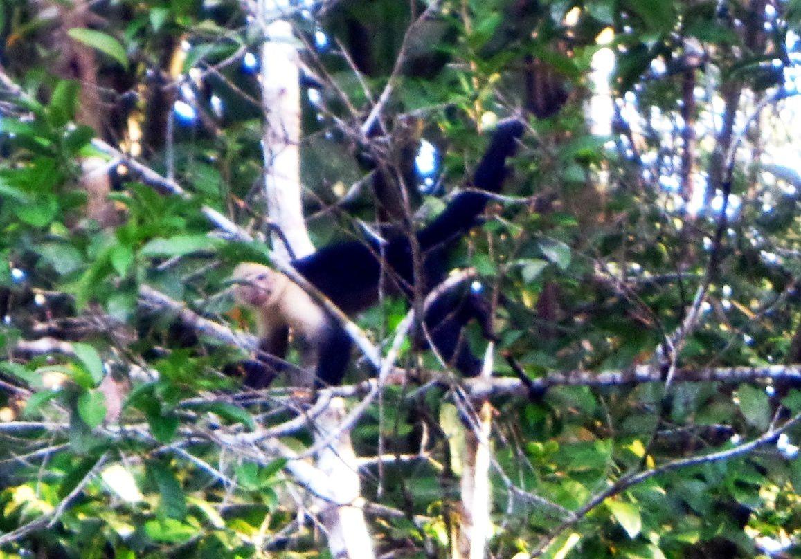 Costa Rica - Jour 8 : Tortuguero - En canot sur le canal
