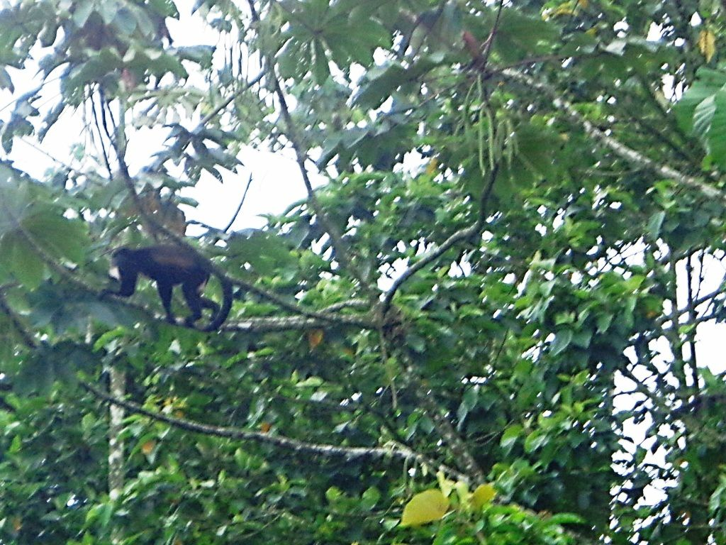 Costa Rica - Jour 7 : destination Tortuguero
