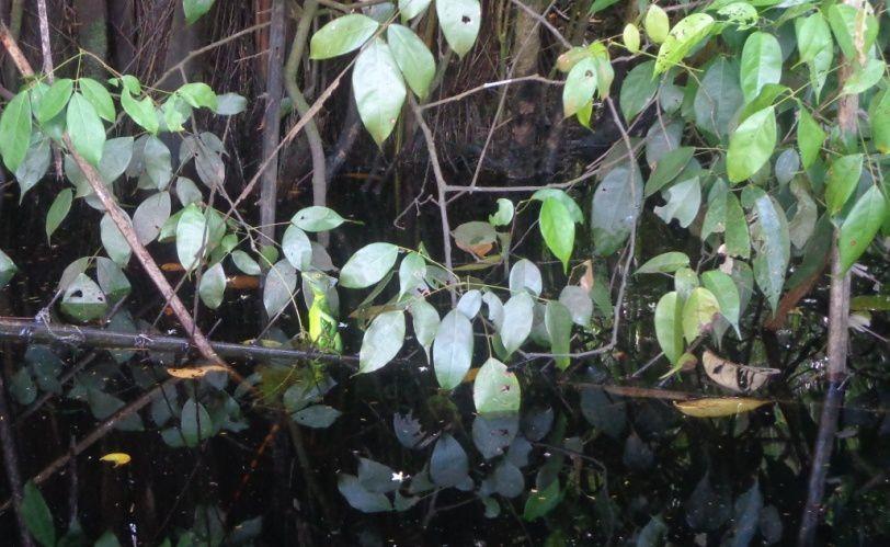 Le concierge est caché dans les feuilles...