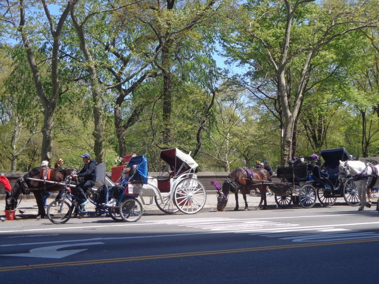 New-York - 5e jour : un brin de Central Park