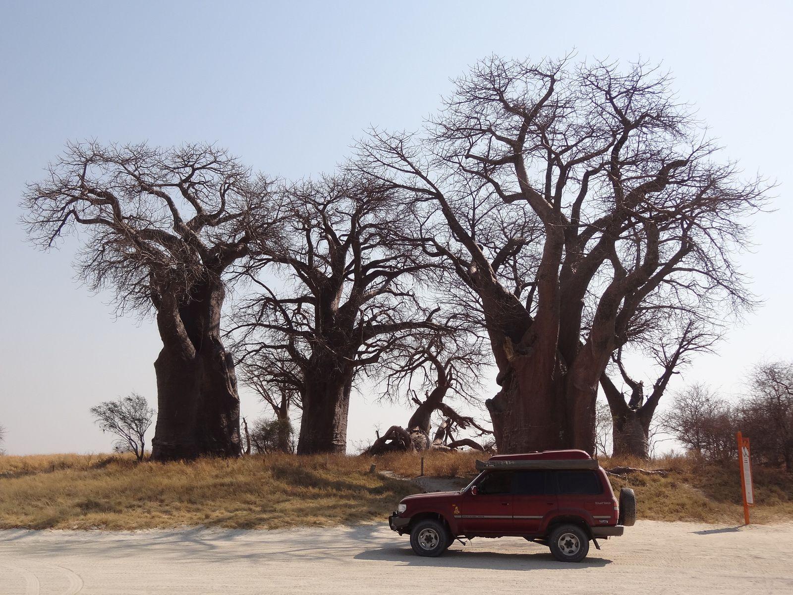 Acte 5.2 / Africa trip 2014 / Botswana - SA - Swaziland - SA