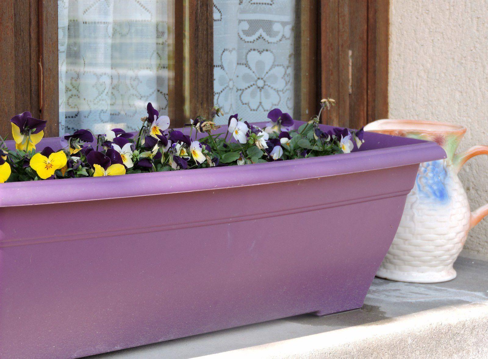 Une petite jardinière couleur aubergine accueillent quelques violettes ...