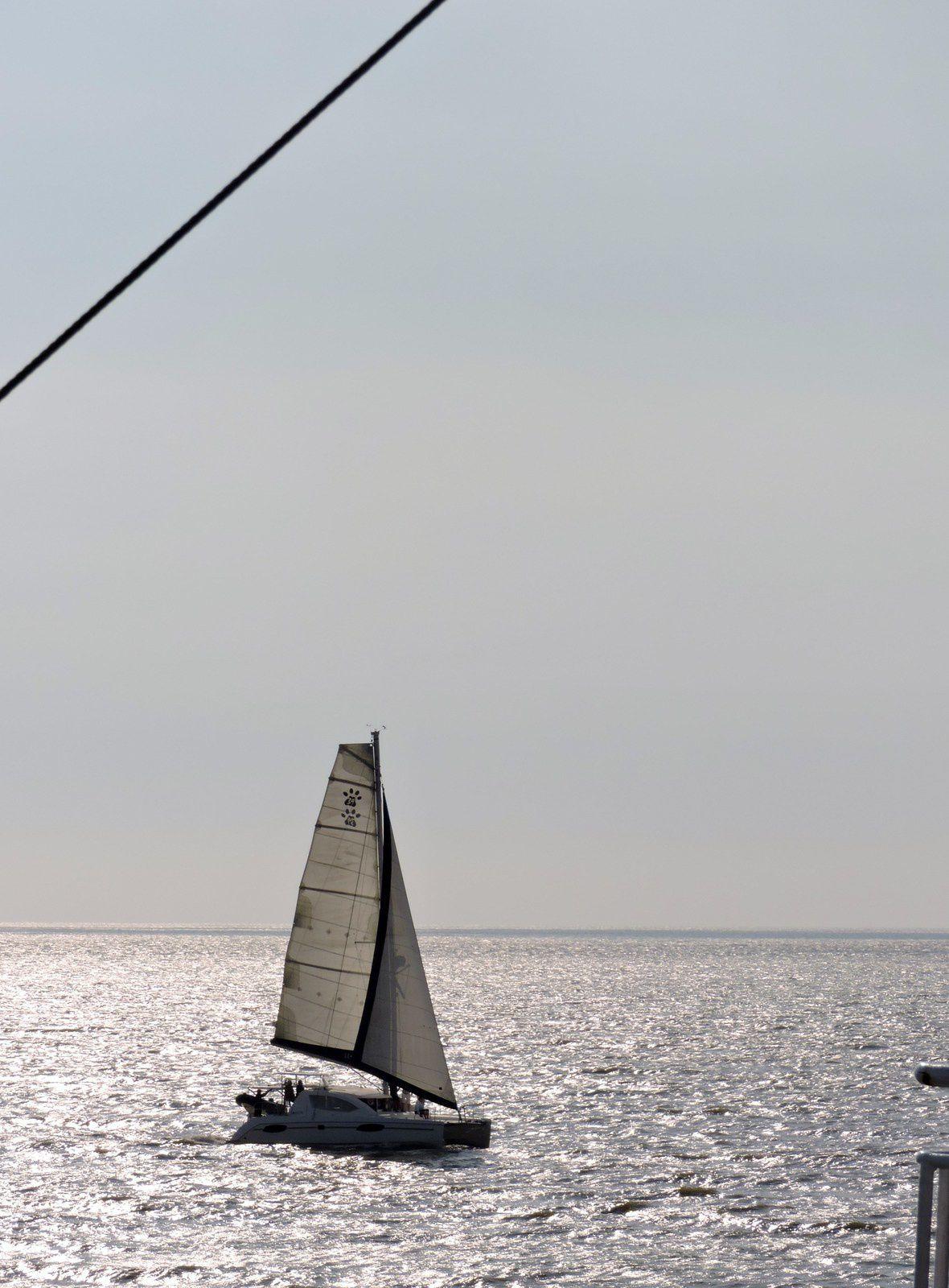 Sur le bâteau je regarde au loin le phare de Cordouan qui s'éloigne et la côte Charentaise qui se rapproche doucement...