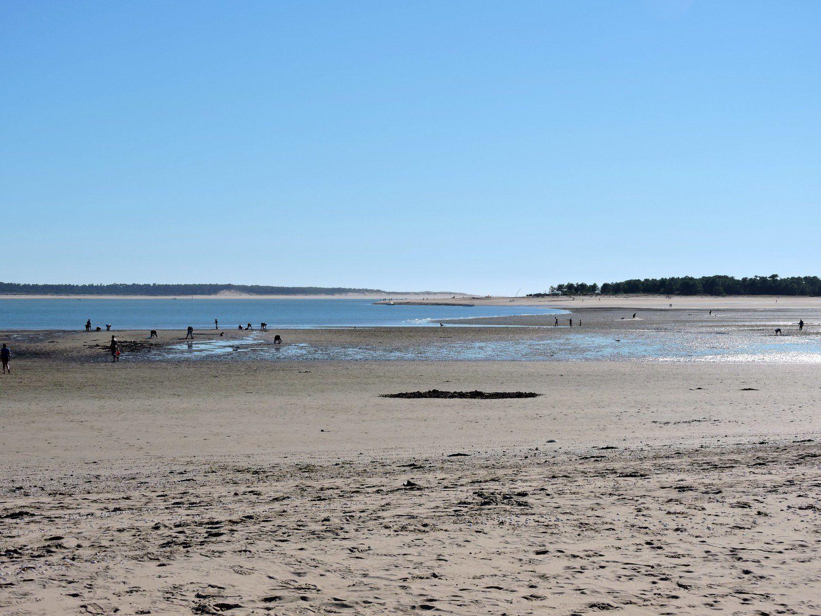 J'aime la plage de Gatseau à ST Trojan , il y a peu de monde en ce moment , beaucoup de retraités se reposent sur le sable ... En face de Gatseau on voit Ronces les bains.