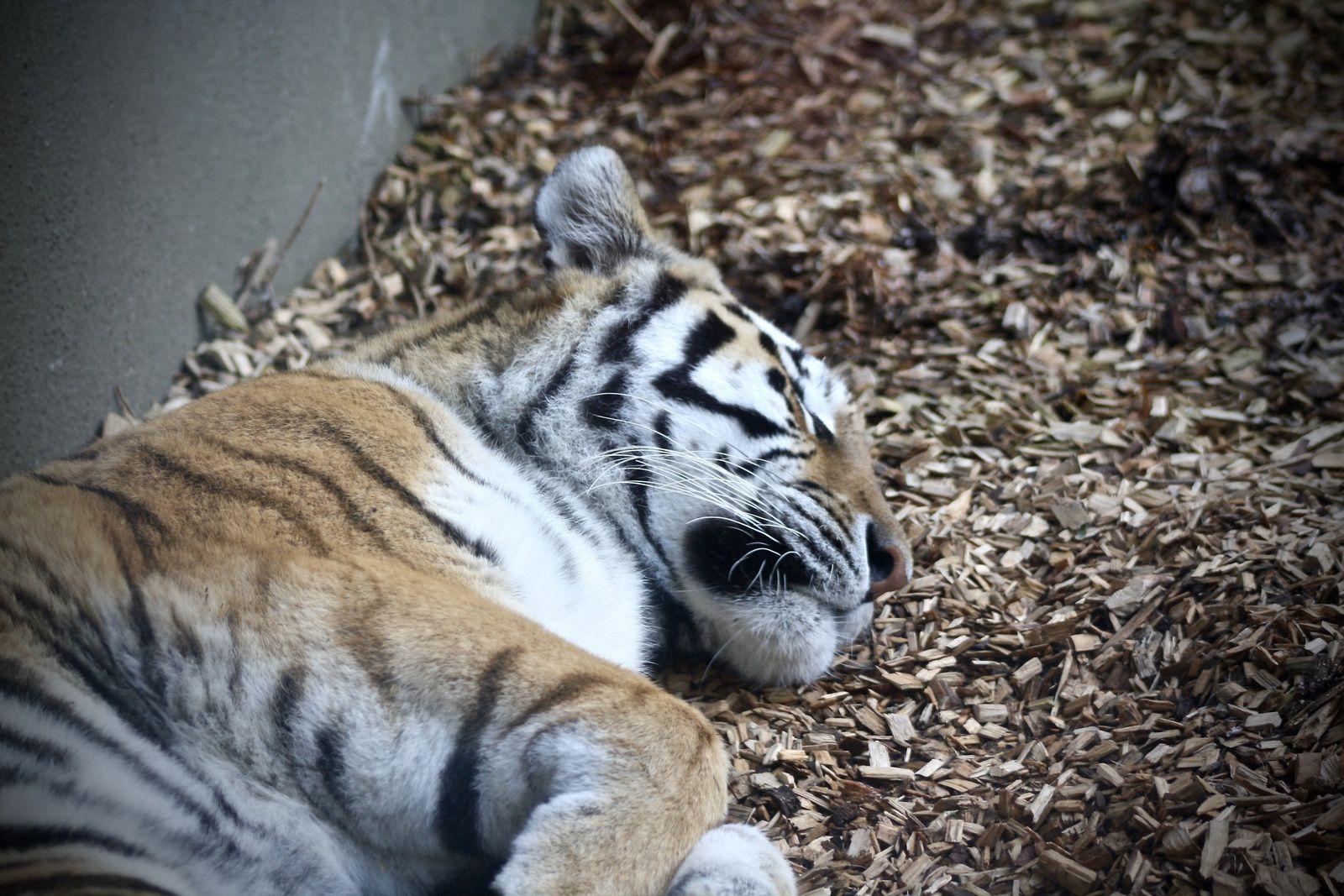 Je vous fais visiter Dublin : Dublin zoo