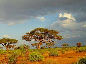De l'aide pour les Massaï ... Help for Maasai People ...