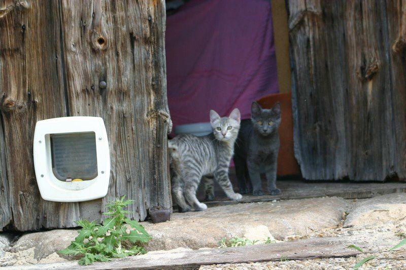 Le gris c'est Canaille et le noir c'est Speedy, ils sont les nouveaux résidents de la grange depuis fin Juin