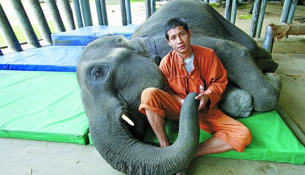 Mosha et son mahout...
