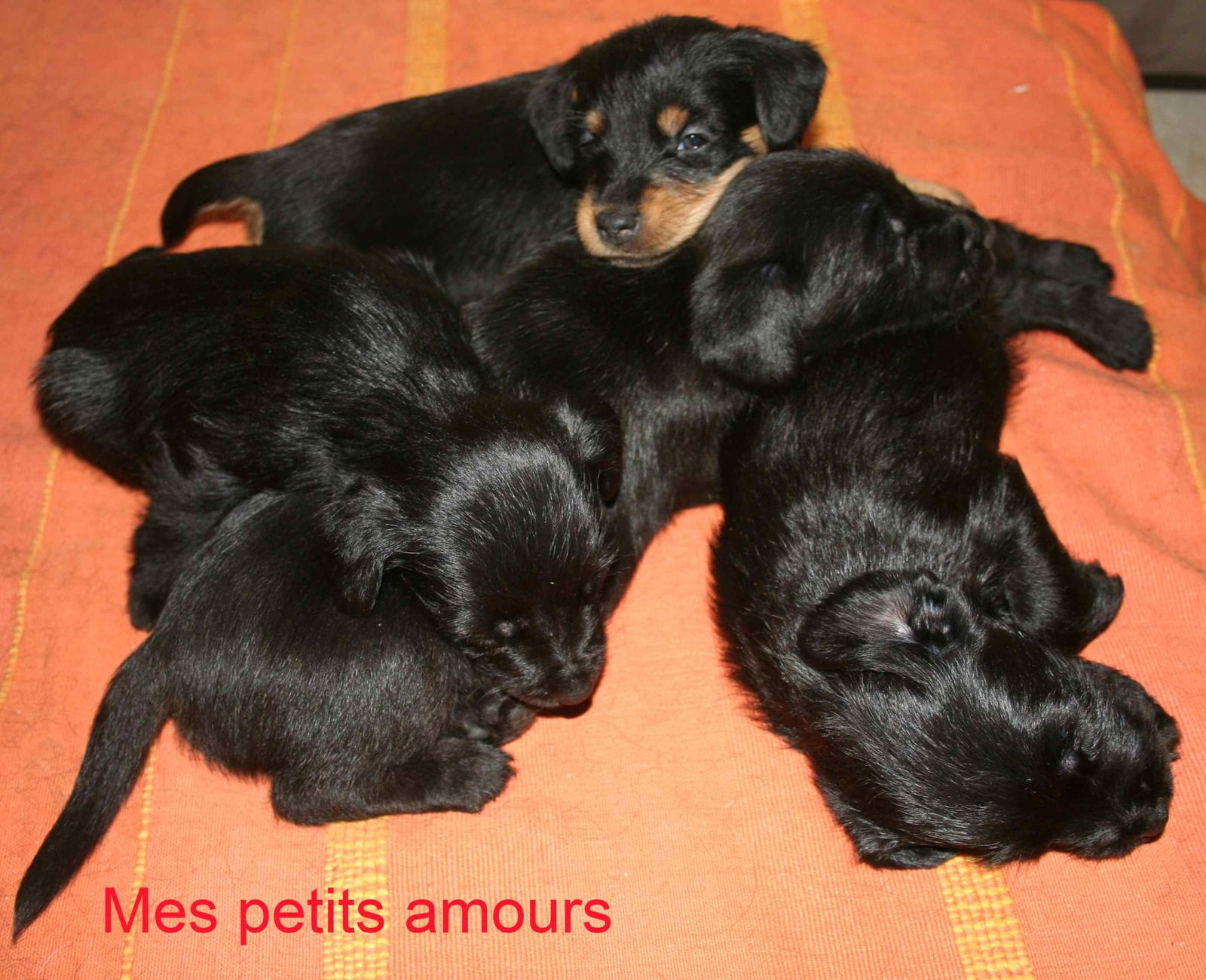 Mes petits chiens.