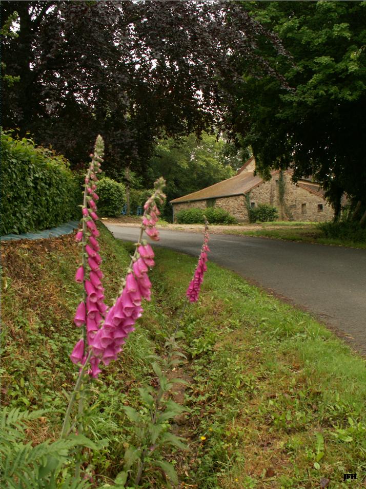 Vue de la maison lorsqu'on vient de la route de Mamers par le bas du Tertre.