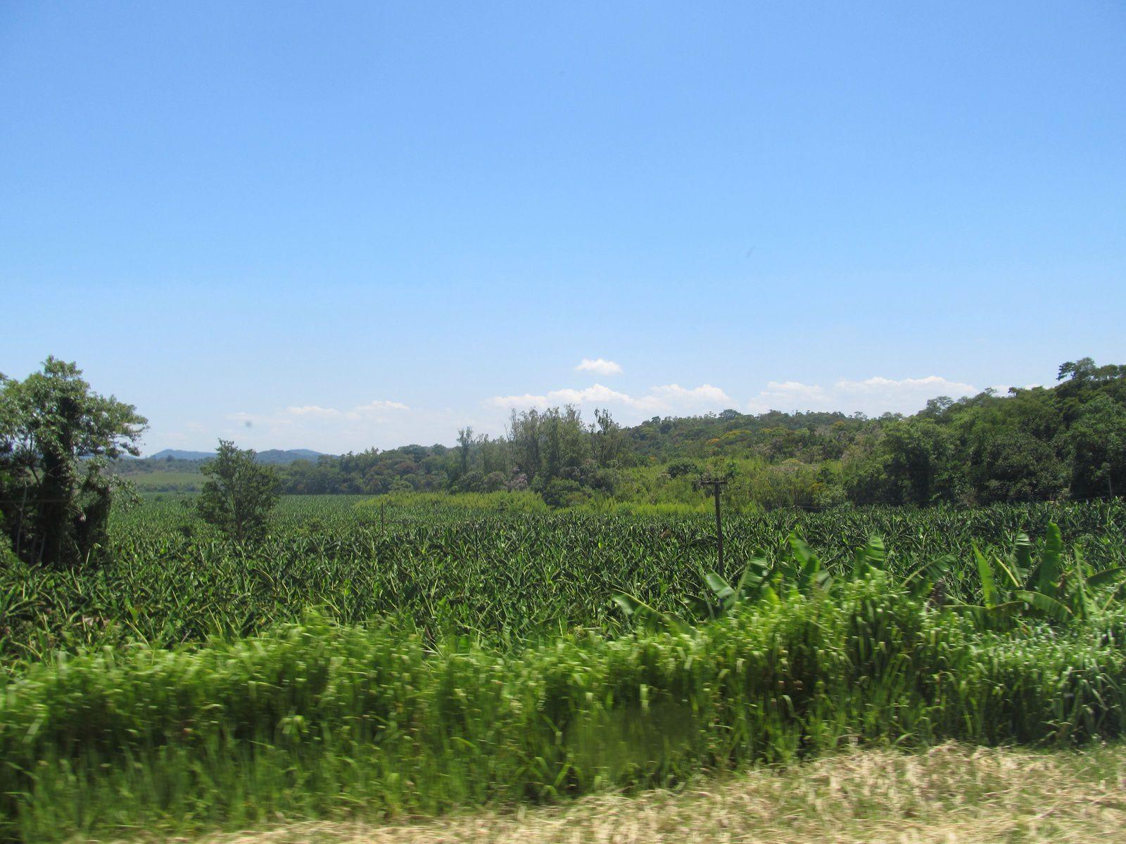 Très chaud dans le sud du BRÉSIL  ouf  quelle color  mamamia   !!!!!!!!!!!!!!