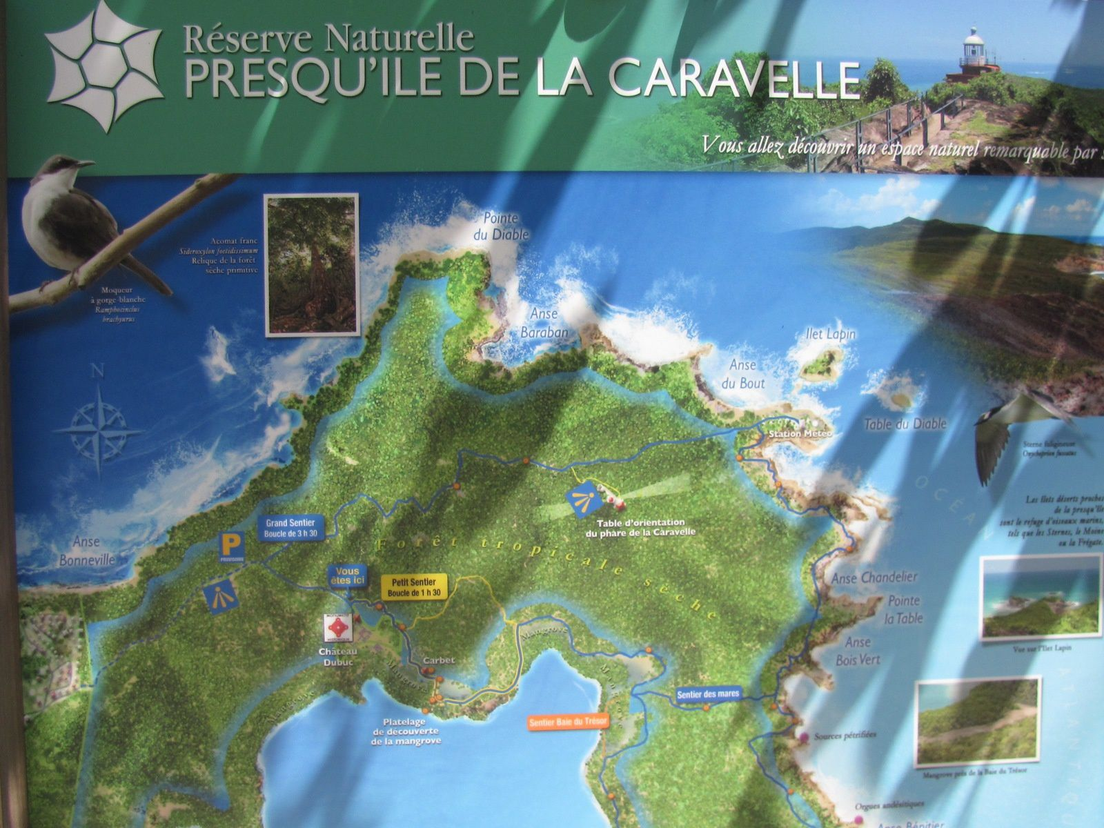 TARTANE ET LA PRESQU'ÎLE DE LA CARAVELLE // L'OR  BLANC DES CARAÏBES // LE ROBERT .