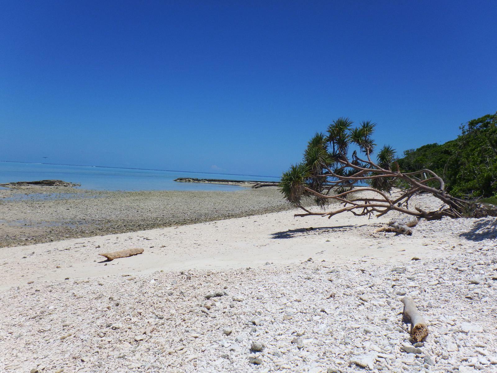 Lady Musgrave Island et ses oiseaux (qui font leur nid au sol car il n'y a pas de prédateurs!)
