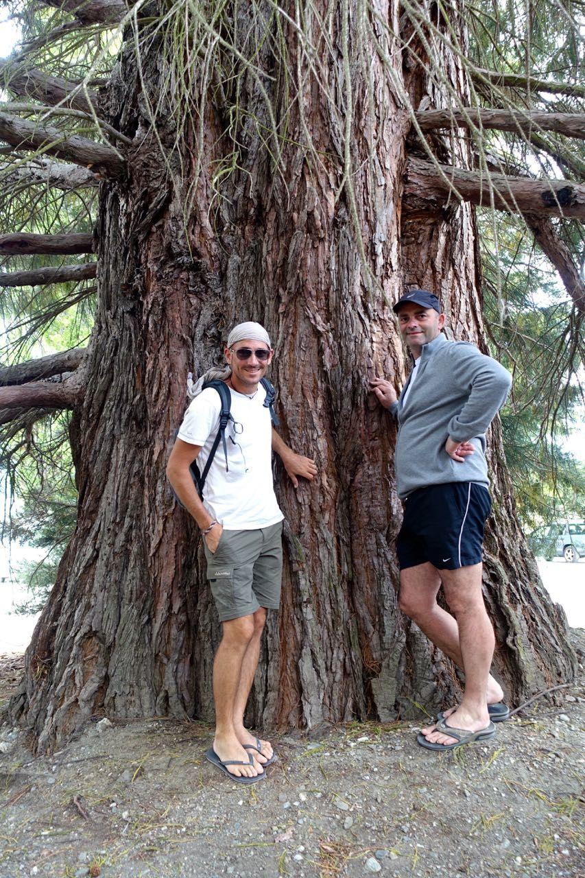 Mercredi 18 : Wanaka - on se réveille tranquille car tout le monde est bien fatigué des 2j de marche et aussi des coups de soleil! On part pour Wanaka et on déjeune au bord du lac dans un très bon petit resto. Glaces après déjeuner (super bonnes) puis balade au bord du lac. On voit de très beaux arbres dont la hauteur impressionne Christophe (séquoia, saules pleureurs, ...) ! Également un arbre qui pousse tout seul, dans l'eau. On lève nos shorts pour aller le voir, et puis petit à petit, sous l'impulsion de Jade, on va se baigner ! Ce lac a une eau beaucoup plus chaude que le lac du glacier, quasiment 20°, on n'hésite pas longtemps vu qu'il fait encore super beau. Pendant les courses de ravitaillement, Céline s'entraîne à parler anglais en toute occasion, elle va faire des progrès! Le soir dodo encore une fois près d'un lac, emplacement sympa et... gratuit! La plus grosse difficulté consiste à réfléchir très longtemps pour décider comment orienter nos camping cars pour se protéger du vent &#x3B;-) mais en fait il y a un élément qui nous obligera à écourter la soirée dehors : des nuées d'insectes (scarabées ailés, mouches de sable, papillons de nuit). Plus de 200 de ces bestioles sont rentrées dans notre camping car, on a mis plus d'1/2 heure à les tuer avec des morceaux de sopalin...... Elea a plutôt bien pris la chose, elle qui a tendance à stresser très fort quand des bêtes rodent autour de son espace vital...